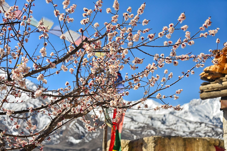 Best Seasons to Trek in Nepal